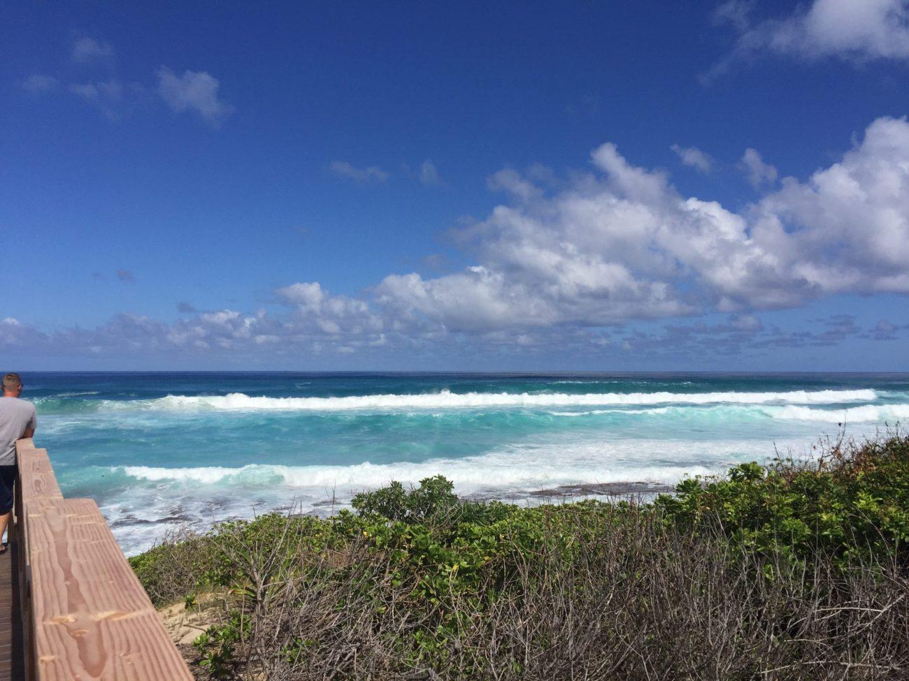 hawaii,dogrun