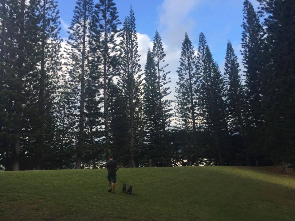 ハワイ,森