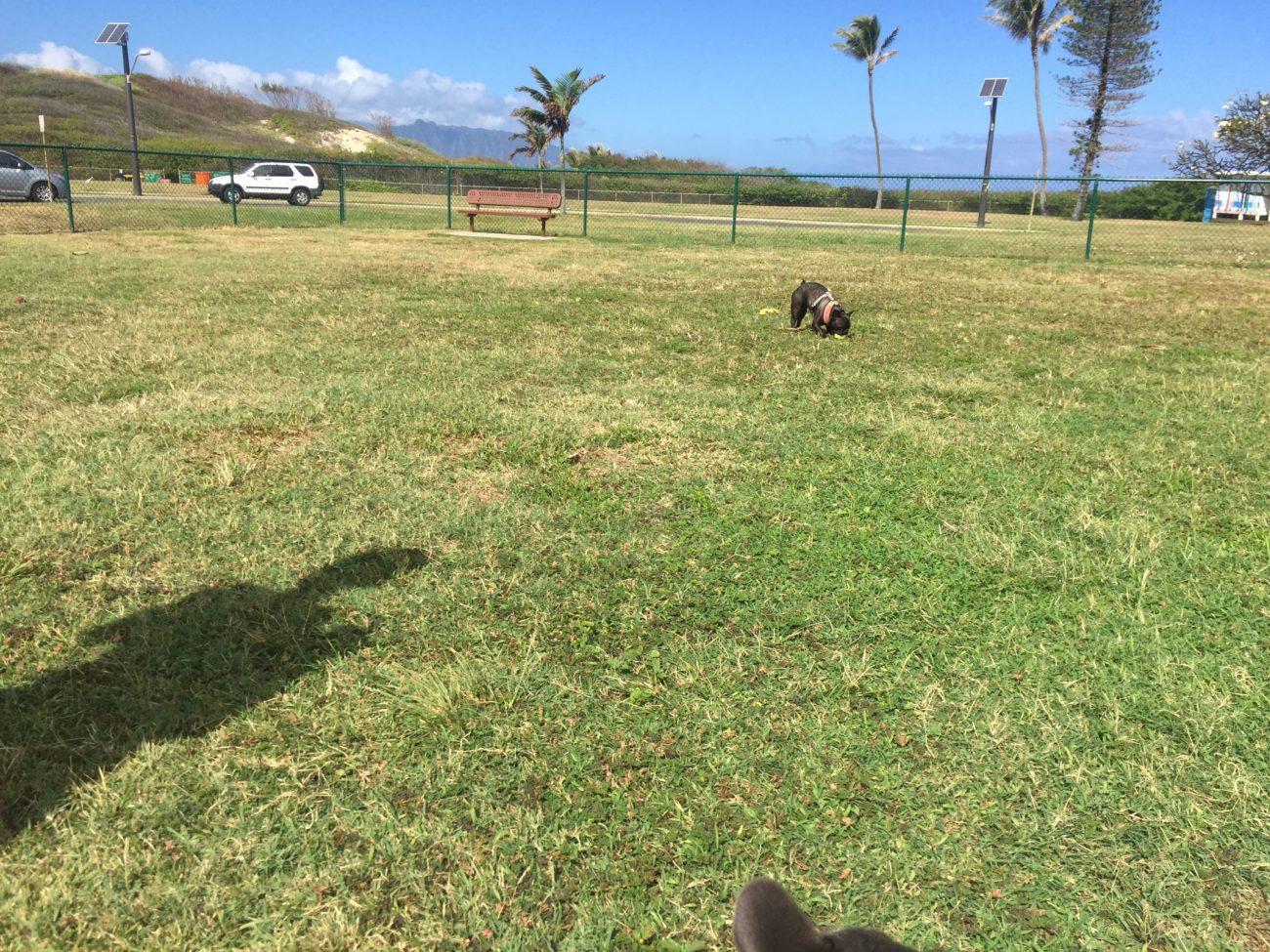 ハワイ,ドッグラン