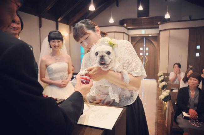 フレンチブルドッグ結婚式