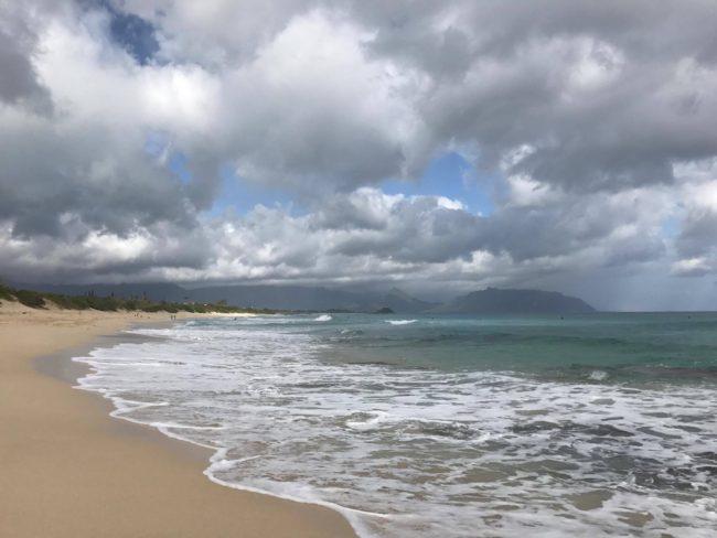 フレンチブルドッグ雨のビーチ