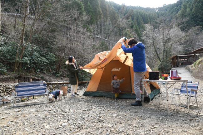 フレンチブルドッグ キャンプ