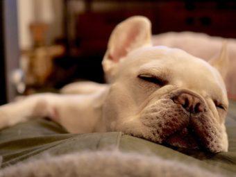 フレンチブルドッグ 枕