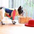 【結果発表】『雨にも負けずコンテスト』docdog × French Bulldog Lifeコラボ企画