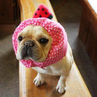冷やし犬ヅラ【ピンク.赤スイカ】