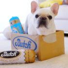 フレンチブルドッグが野生にかえるフード「ブッチ」〜犬として、本当においしいものを