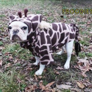 Giraffe Froodie