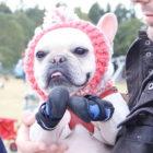 冬のレジャーにも犬の靴を。さぁ、フレブルの楽しいシーズン到来だ!