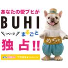愛ブヒがBUHIを1ページ独占!「めちゃコミック」コラボキャンペーン