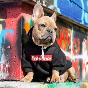 Frenchie Dog Hoodie
