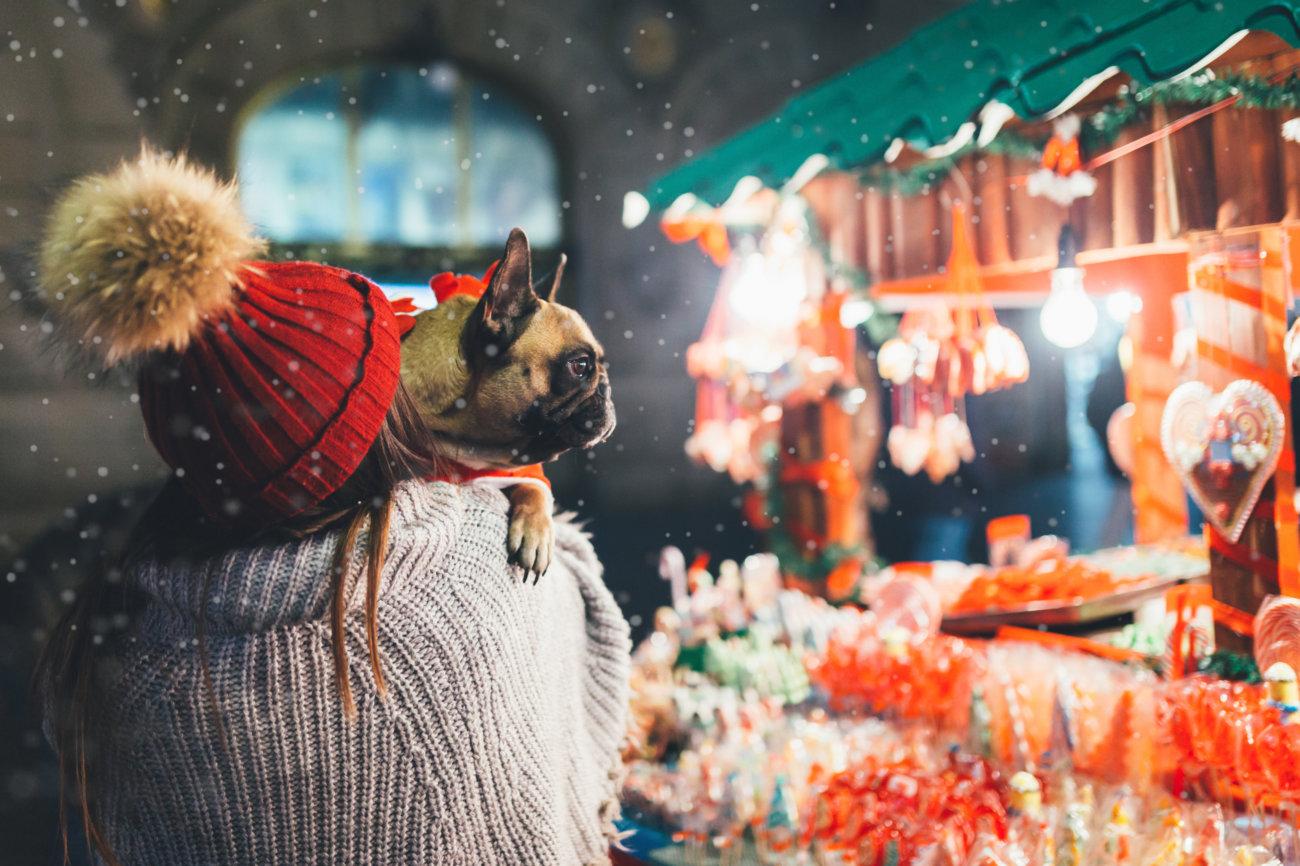 フレンチブルドッグ,クリスマスブヒセット